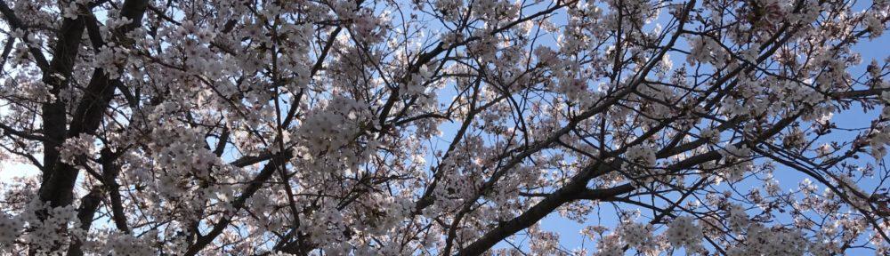 新しい季節を迎える長崎教会の奉仕者の喜びに満ちた一週間